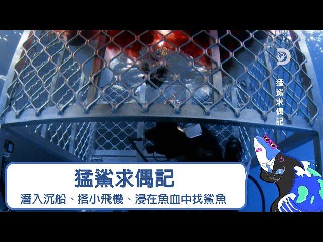 暈船的母鯊趕快來!深入沉船、搭上小飛機、然後身在魚血中《鯊魚週:猛鯊求偶記》