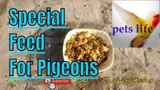 special khurak for pigeon kabootar|| #pigeon food || best feed for breeding pigeon
