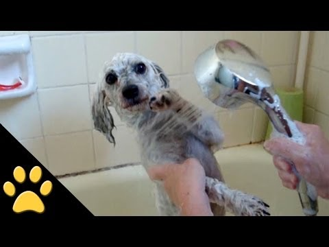 Dogs Taking Baths: Compilation