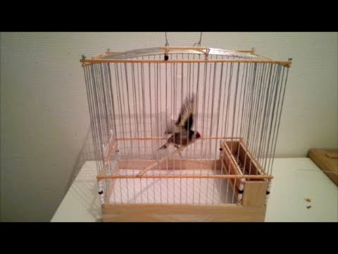Fabrication cage chardonneret en bois  YouTube