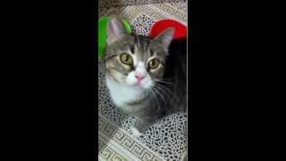 Говорящая кошка Мура