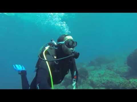croatie dubrovnik diving with honey