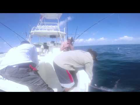 Blue Marlin With Blue Reef Adventures, Belize
