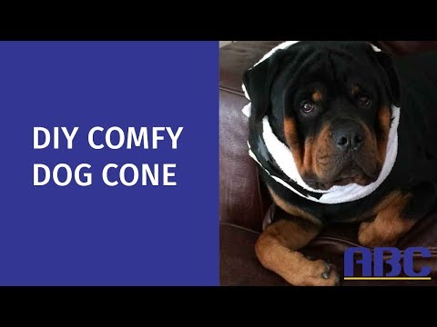 Diy Comfy Dog Cone How To Make A Homemade Dog Cone