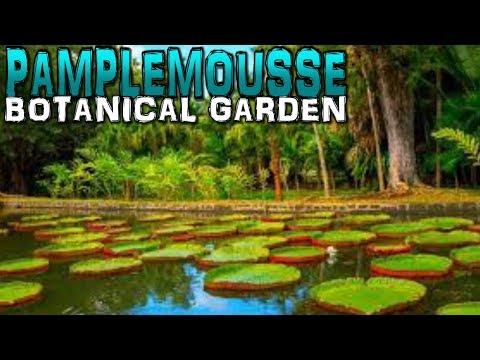 Pamplemousse Botanical Garden Mauritius 4K