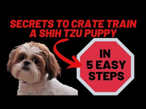 Crate Training A Shih Tzu Puppy (8 Weeks Old Or Older) Fast