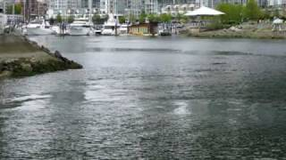 A gray whale in False Creek, Vancouver