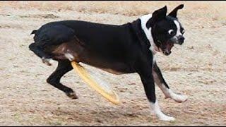 Самые смешные животные 3 Лучшие видео 재미있는 동물 Cutest Animals 有趣的动物अज ब ज नवर