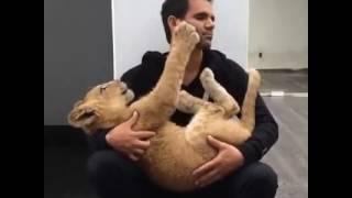 Отдам котенка в добрые руки!