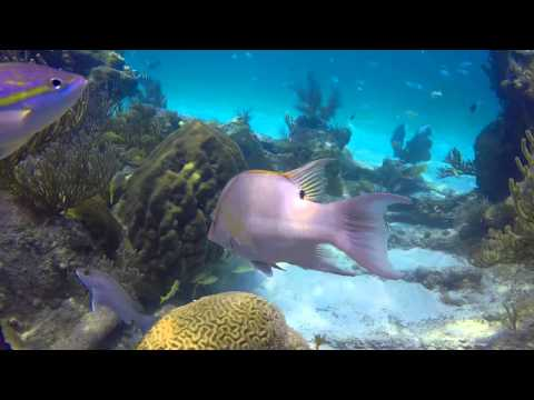 GoPro4 Hollis Rebreather diving Dry Tortuga reefs