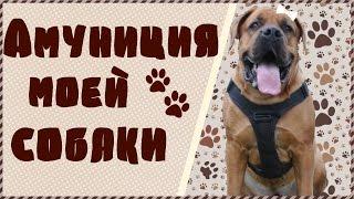 Амуниция моей собаки | Polina & Oye