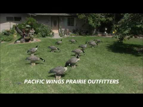 Pacific Wings full body motion goose decoy