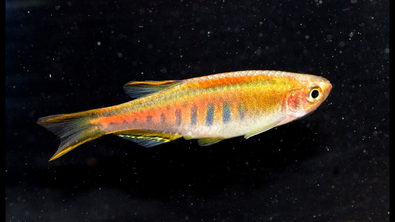 kit com directional mfh dfk fish ip walmart feeder moultrie