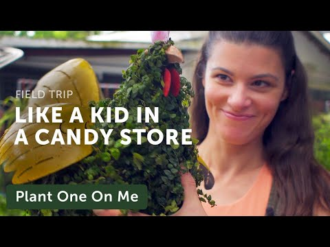 Singapore's Candy Floriculture Nursery Tour —Plant One On Me — Ep 130