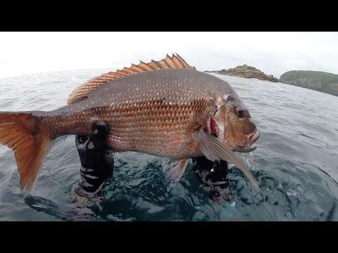 Breathless Addiction Ep 1 - Exploring the Bay of Plenty - Spearfishing New Zealand 2015