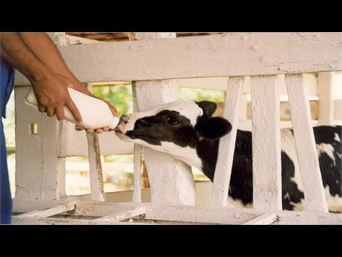 Clique e veja o vídeo Curso Shamballah - Nutrição para Produção