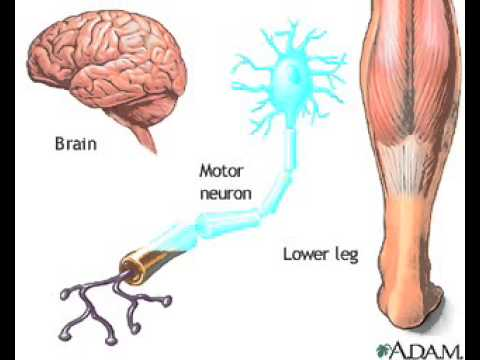 Nerve conduction CNS PNS Animation