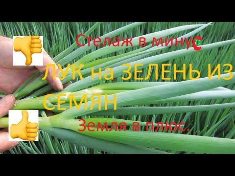 Лук на перо из семян/чернушки ч.2