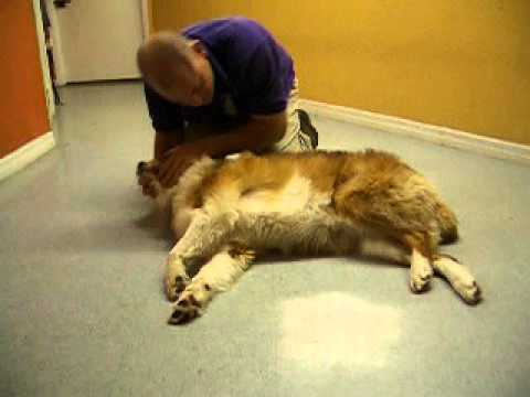 Dog CPR, Cardiopulmonary Resuscitation For Dogs