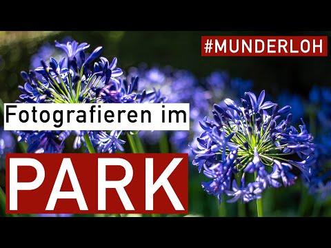 Fotografieren im Park