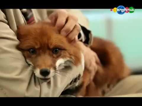 В мире животных МУРЕНЫ