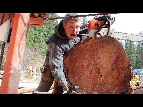 THIS TREE IS HUGE! (Sawmills in Action)
