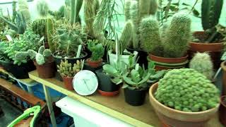 Living with Desert Plants in Ireland and high humidity - Our Challenge
