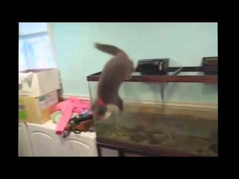 Funny Cats Falling Down 2014