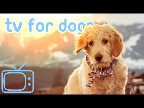dog-tv!-how-to-relax-my-dog-with-soothing-music!-new-2019!