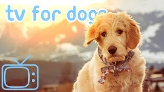 Dog TV! How to Relax My Dog with Soothing Music! NEW 2019!