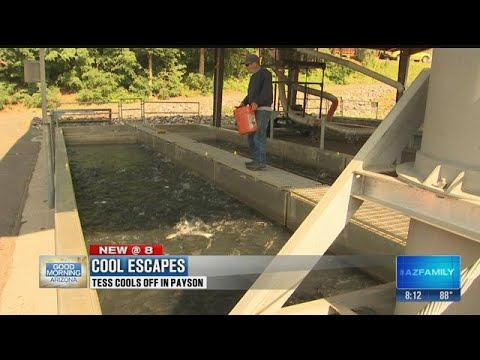 Cool Escapes: Tess Goes To The Tonto Creek Fish Hatchery