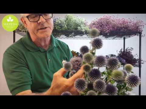 Mayesh Minute: Local Oregon Flowers