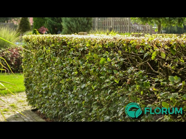 Welke erfafscheiding ga jij gebruiken in je tuin? Bekijk alle mogelijkheden!