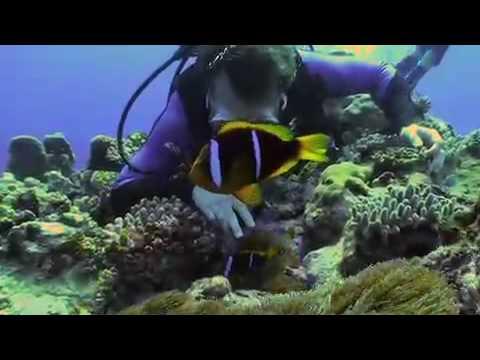 Tonga scuba diving