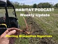 Habitat Podcast Weekly Update Miscanthus Giganteus Planting & Care