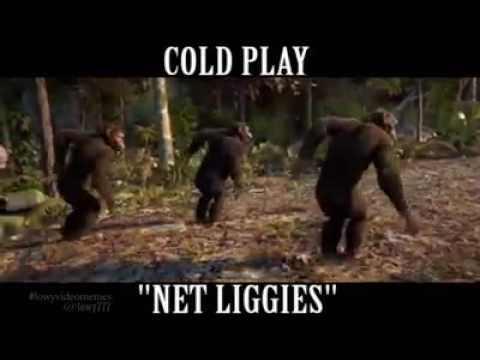 Baboons dancing to net liggies