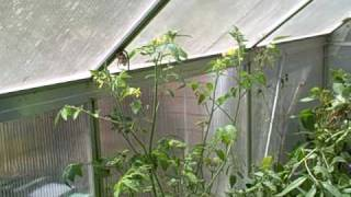 Why purchase a Green House?  Growing Food in a Greenhouse