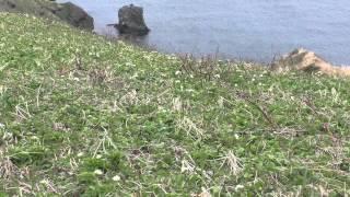 H270508桃岩展望台コースの風景
