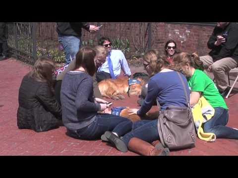 Comfort Dogs help Boston heal