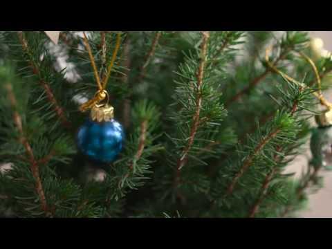 Bloom & Wild Christmas Tiny Tree