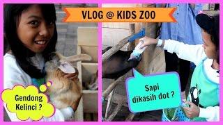 KASIH MAKAN KELINCI Sapi dikasih dot? Nyuapin kambing dan Kelinci @ Kids Zoo