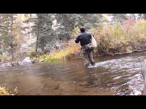 Fly Fishing Cimarron River Film Huge Brown Trout Cimarron River New Mexico