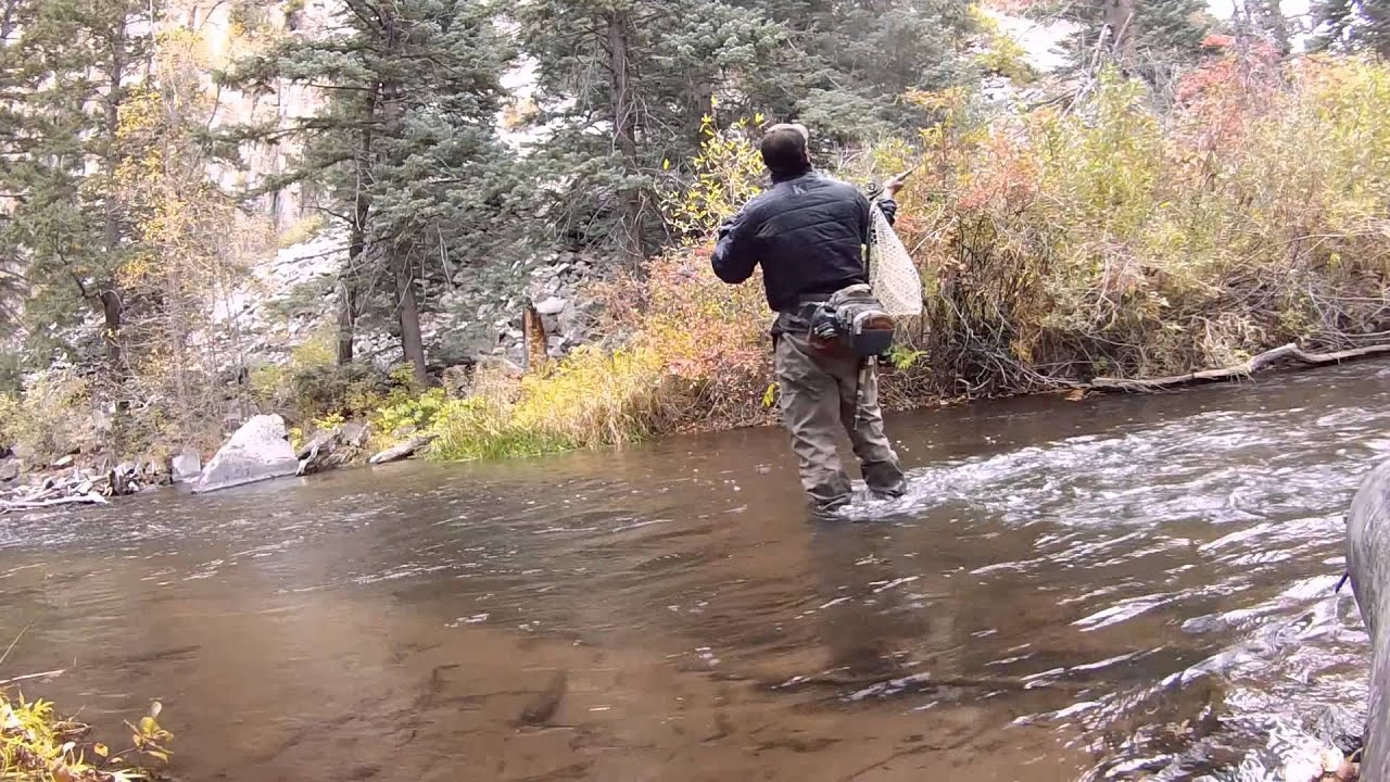 Fly fishing cimarron river film 2014 huge brown trout for Fly fishing new mexico