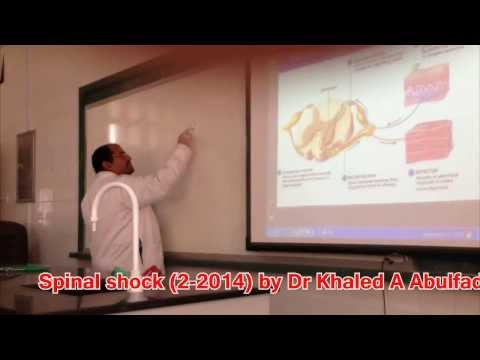 Spinal shock  or Spinal Cord Lesions (2-2014) by Dr Khaled A Abulfadle