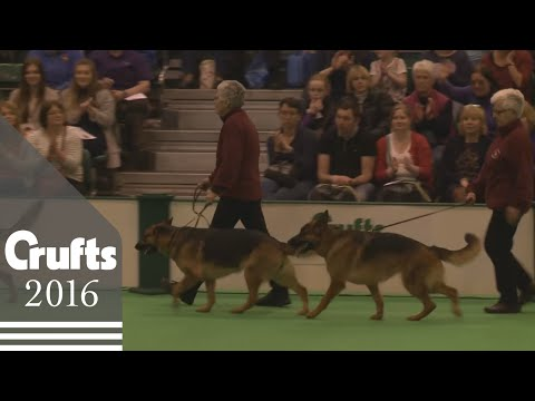 Obreedience Competition Opening Parade | Crufts 2016