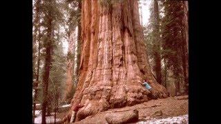 でかすぎ!! 世界一高い木、現存する樹木の樹高ランキングトップ10!