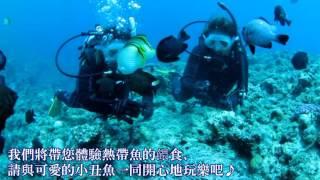 marine club nagi d行程 朝美麗的大海出發 與熱帶魚一同玩耍及餵食的體驗潛水