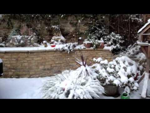 my garden at Christmas