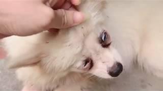 Bim狗被草覆盖,我必须帮助他 | The dog is covered in grass, I must help him