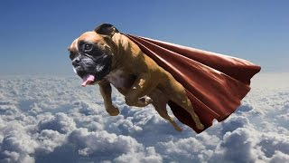 Flying Dog! (Fable 3)